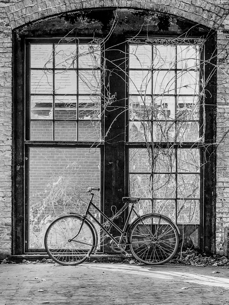 Black and white photograph of vintange bike leaning against large floor to ceiling window overgrown with vines